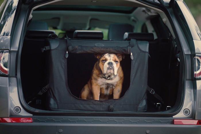 Perro en el maletero de un vehículo como carga
